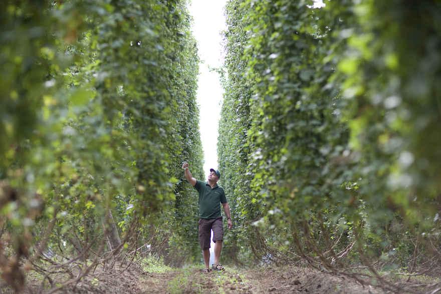 Bierausstoß weltweit rückläufig