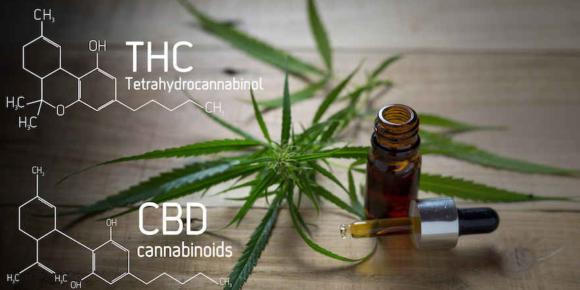Krombacher-Chef investiert in Cannabis
