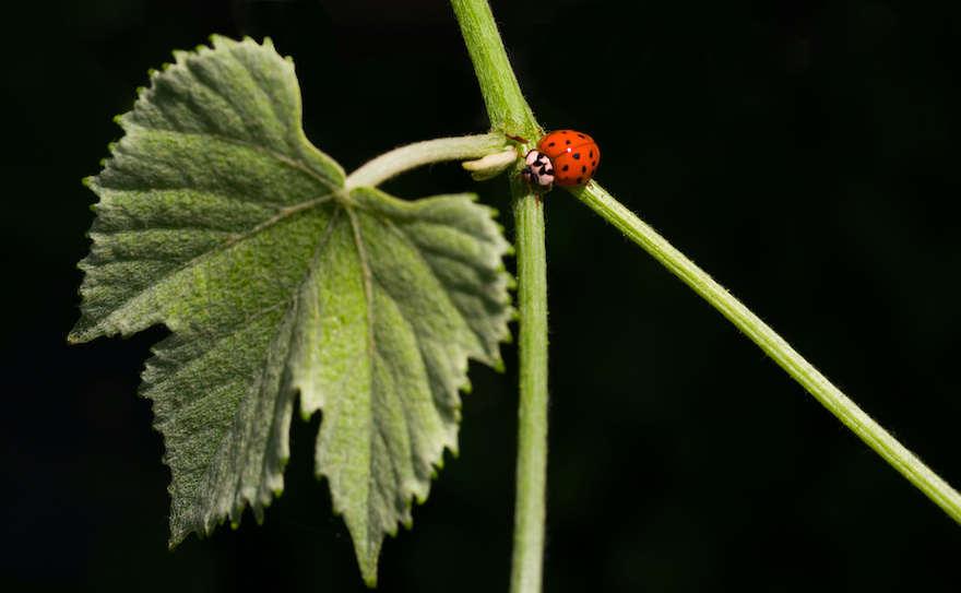 Nachfrage nach Bio wächst