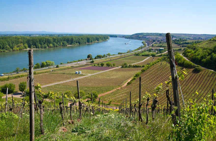 Deutsche Weine hoch geschätzt