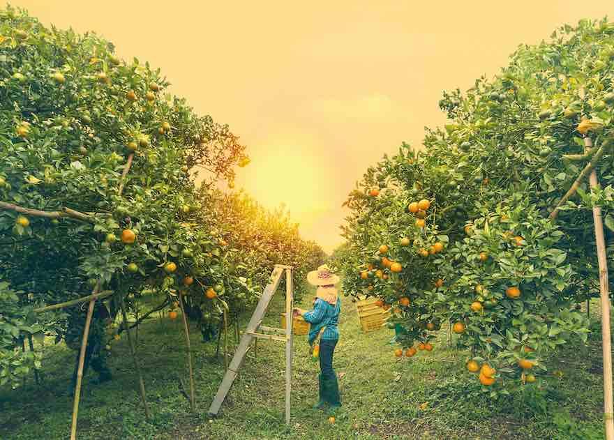 Eckes-Granini unterstützt Kleinbauern