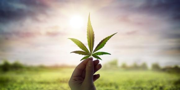 Bitburger Holding setzt auf Cannabis